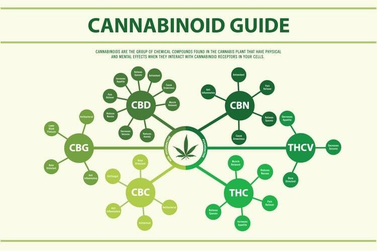 cannabinoids 1